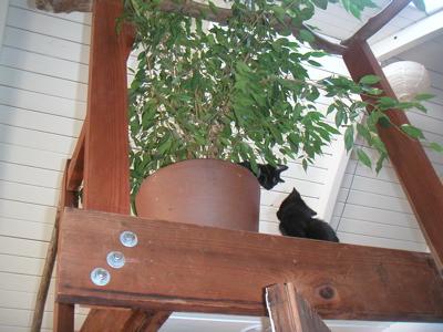 kittenstree