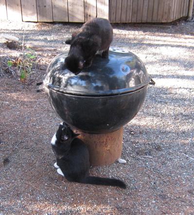 kittensplay3