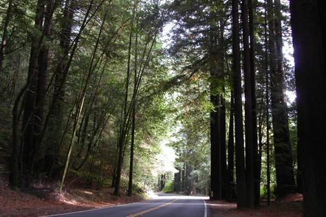p261748-Mendocino_CA-Redwoods_line_route_128_as_you_head_towards_Mendocino.jpg